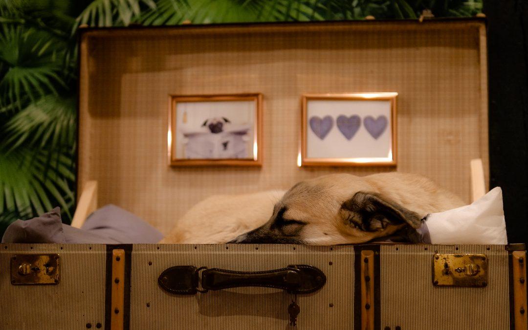 Mensch & Tier Hund im Körbchen